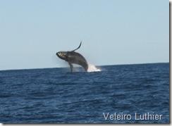 Baleia - Abrolhos 2