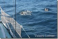 Golfinhos - Abrolhos 1