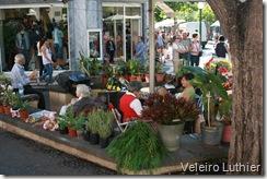 Venda de Flores e Plantas no Funchal